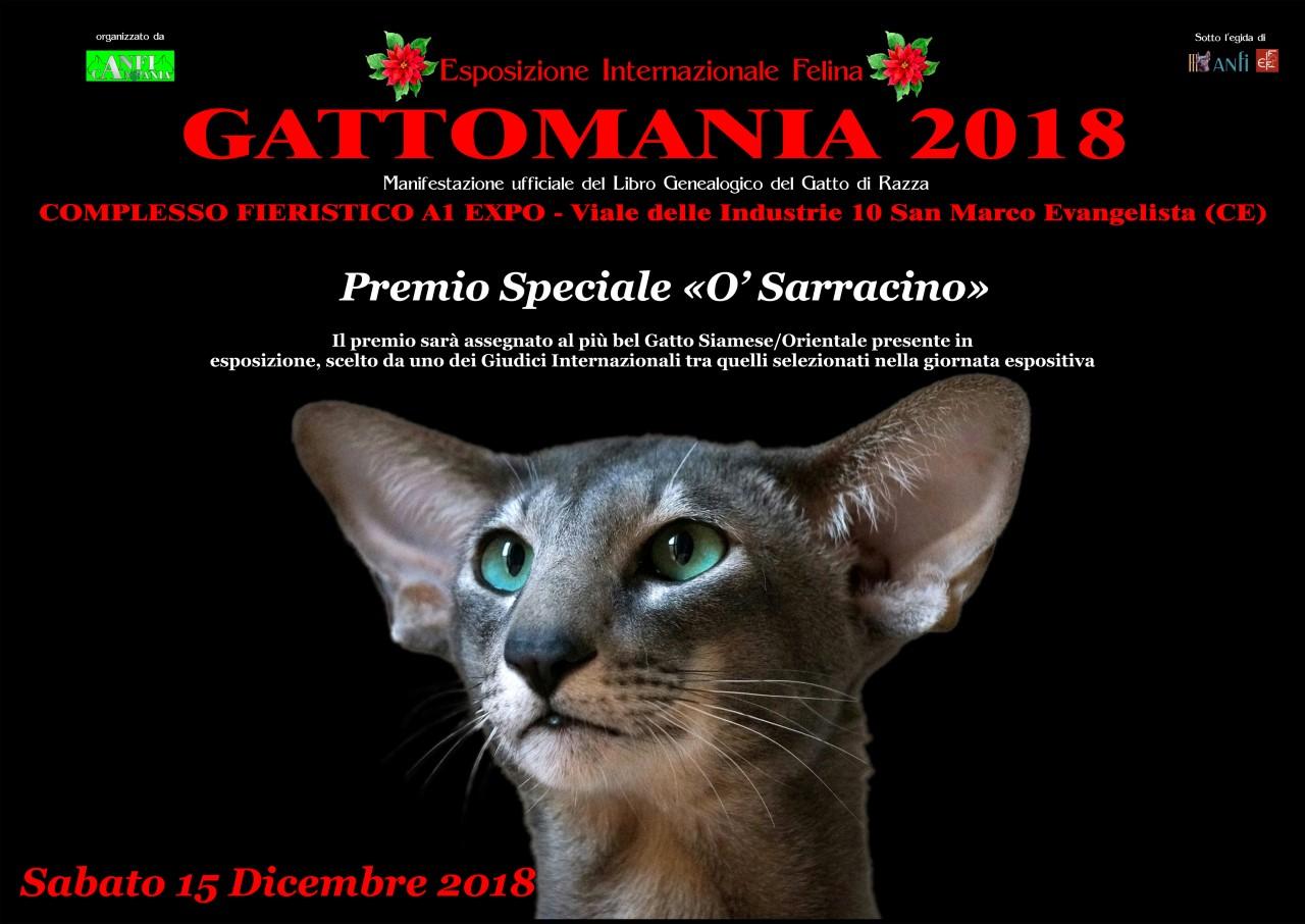 Gatti Archivi Cultura A Colori